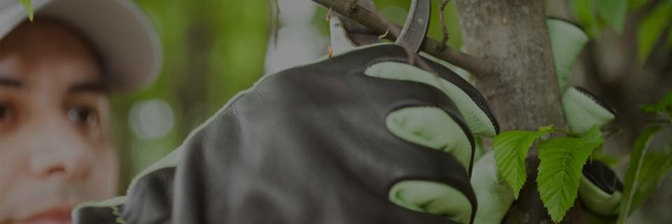 Skerca nudi širok nabor vrtnarskih storitev, ki jih opravljamo z ljubeznijo do rastlin in lepega okolja.